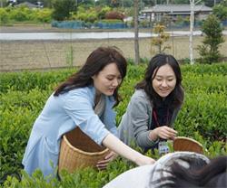 2014年5月 内定者 お茶摘み研修を開催!